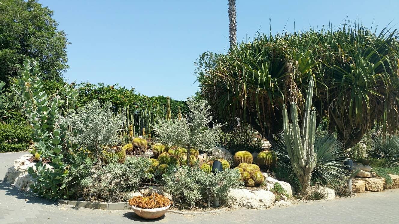 גן הקקטוסים בחולון. צילום-מוטי ישר