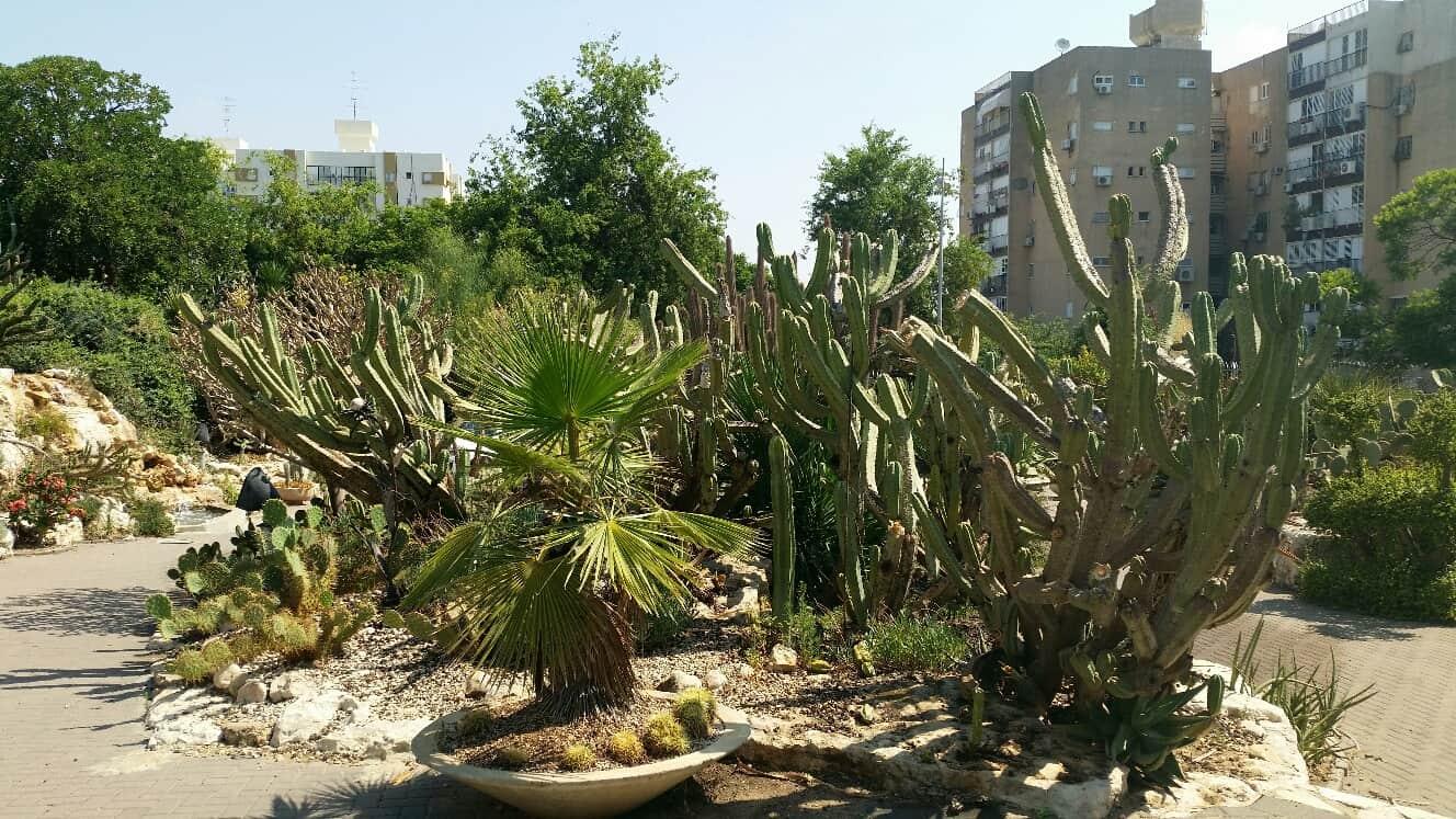 גן הקקטוסים בחולון, צילום: מוטי ישר