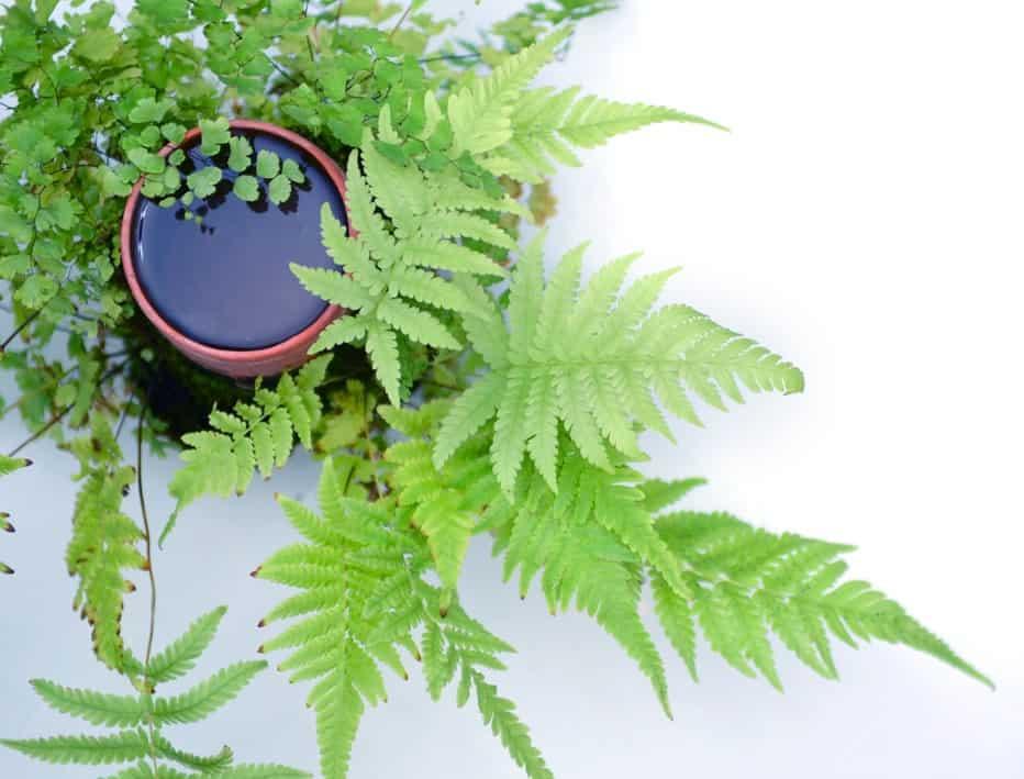 ערן זרחי - גידול צמחייה בחומר ייחודי